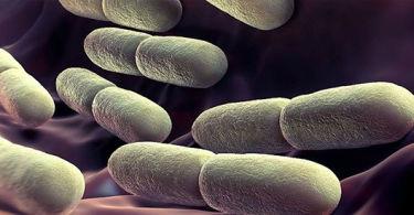 Йодофильная флора в кале у ребенка – почему возникает и как лечить