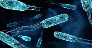 Энтерококк фекальный в моче у мужчин и женщин, лечение