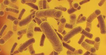 Анализ мочи при бессимптомной бактериурии у беременных, лечение