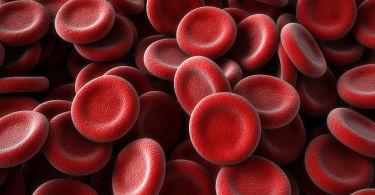 Белковые фракции в анализе крови: что это, расшифровка, норма