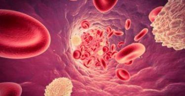Низкий уровень содержания лейкоцитов в крови, от чего происходит сокращение
