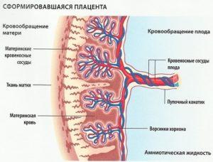 Расшифровка коагулограммы при беременности