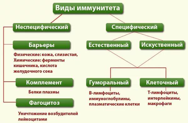 Таблица с видами иммунитета