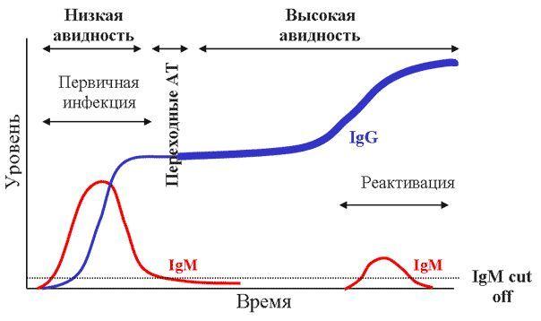 Высокая и низкая авидноть на графике