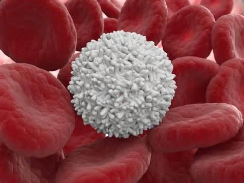 Лейкоцит в крови