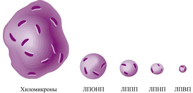 Разные липопротеиды