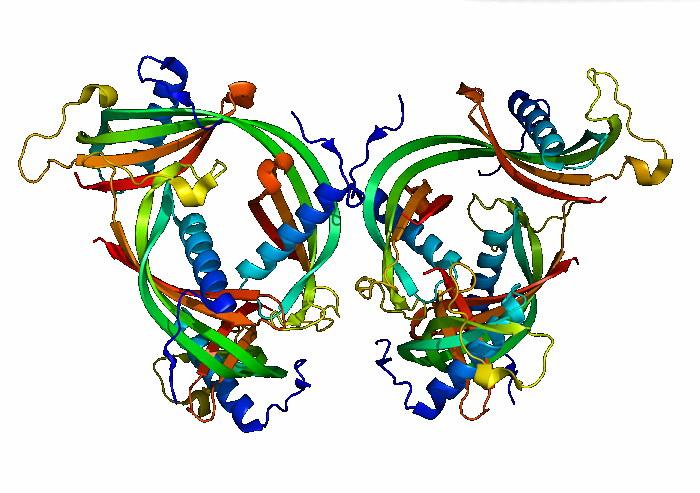 Гамма-глобулин