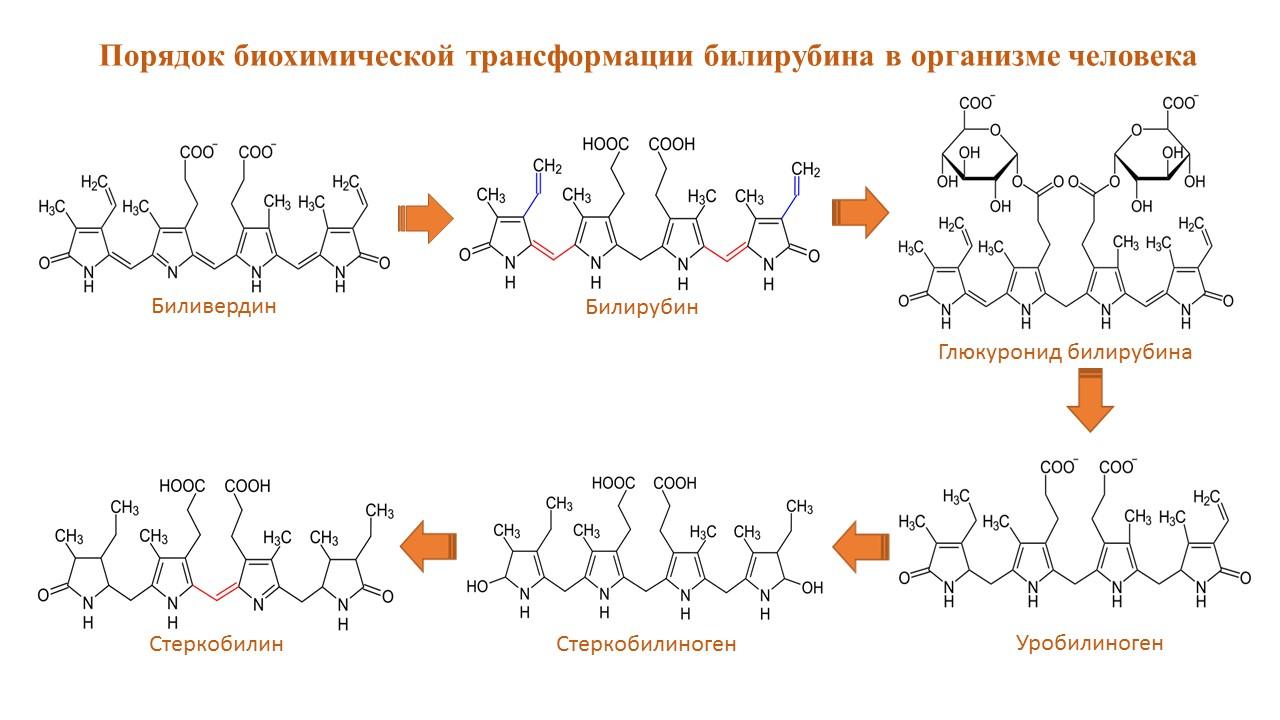 Порядок биохимических превращений билирубина