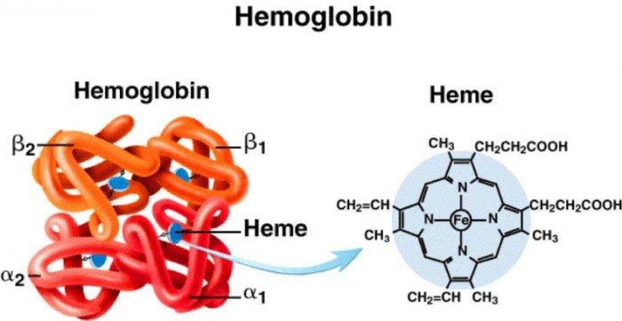 Клетки гемоглобина картинка