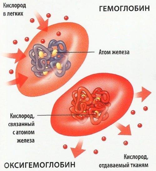 Гемоглобин и кислород