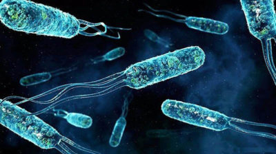 Enterococcus faecalis в крови