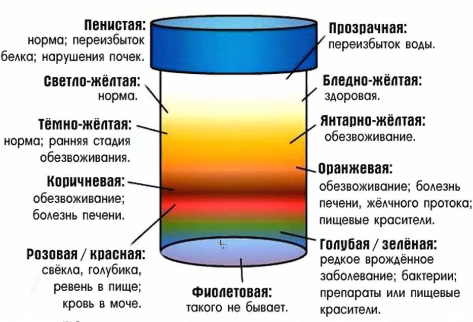 Цвет мочи от фуразолидона